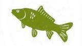 nahled-Rybaření - Pouštění ryby do vody